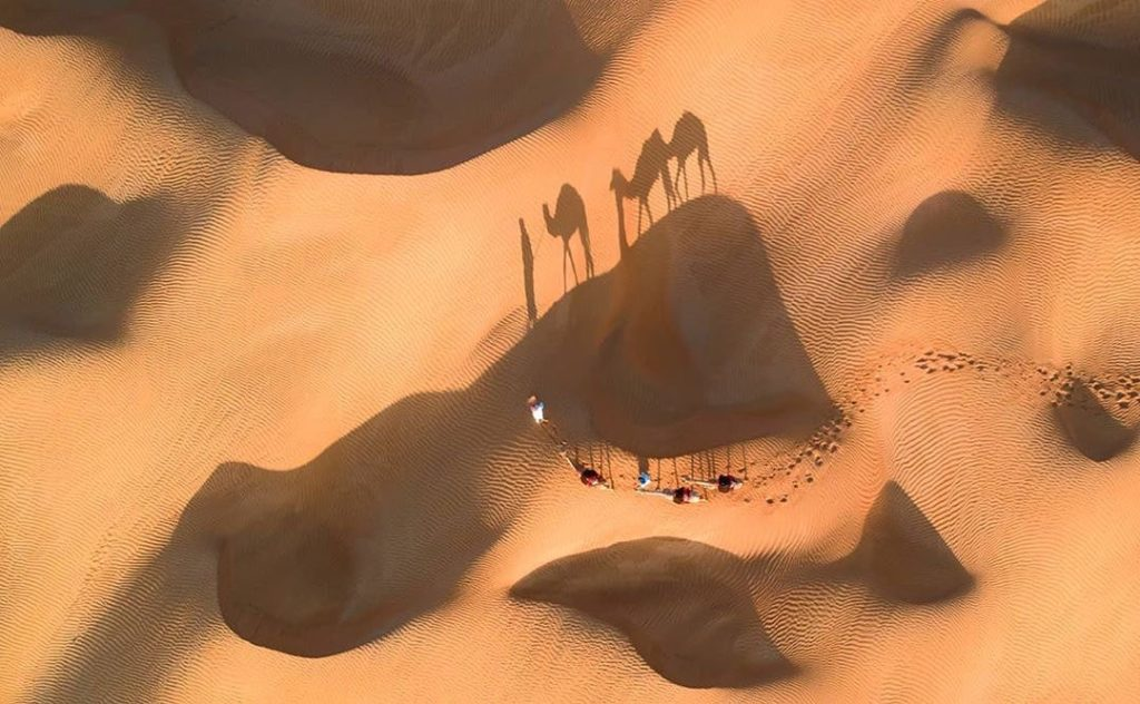 aerial photography of camels in the desert