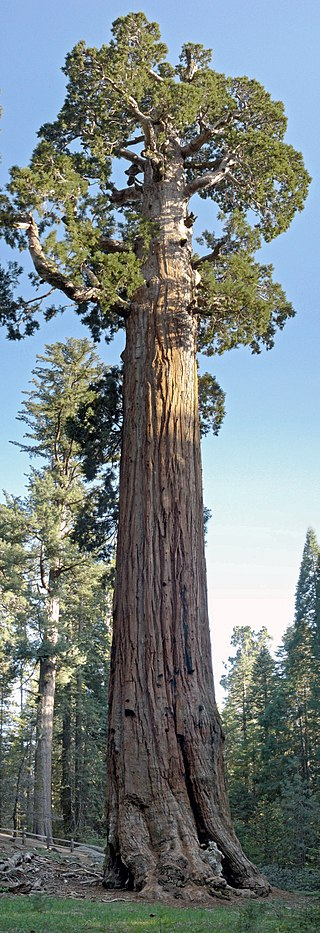 brown trunk tree in sequoia national park