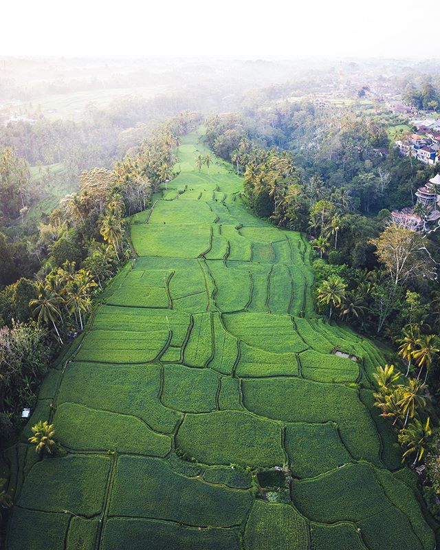 60 degrees drone photography of rice terrace