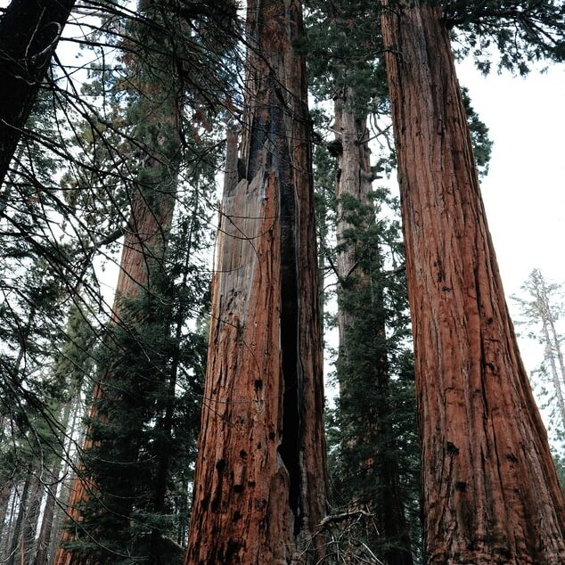 Sequoia National Park – See the largest tree in the world