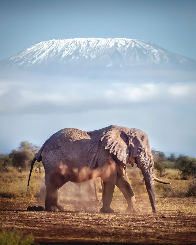 elefant crossing a road in front of a mountain