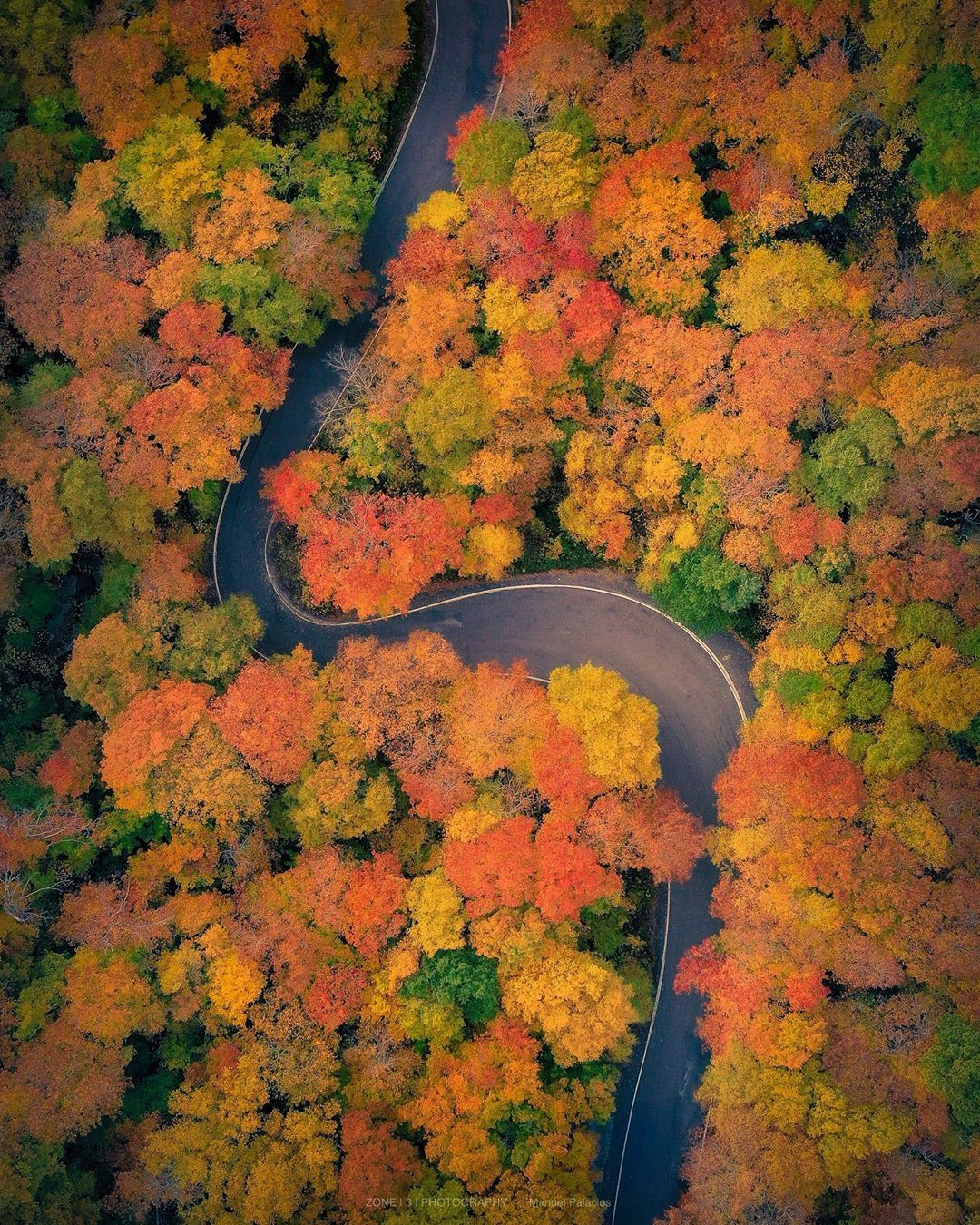 sinuous american road surrounded by autumn trees