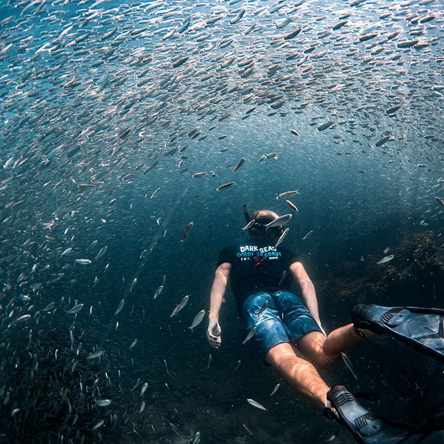 diver with palms surrounded by fishes