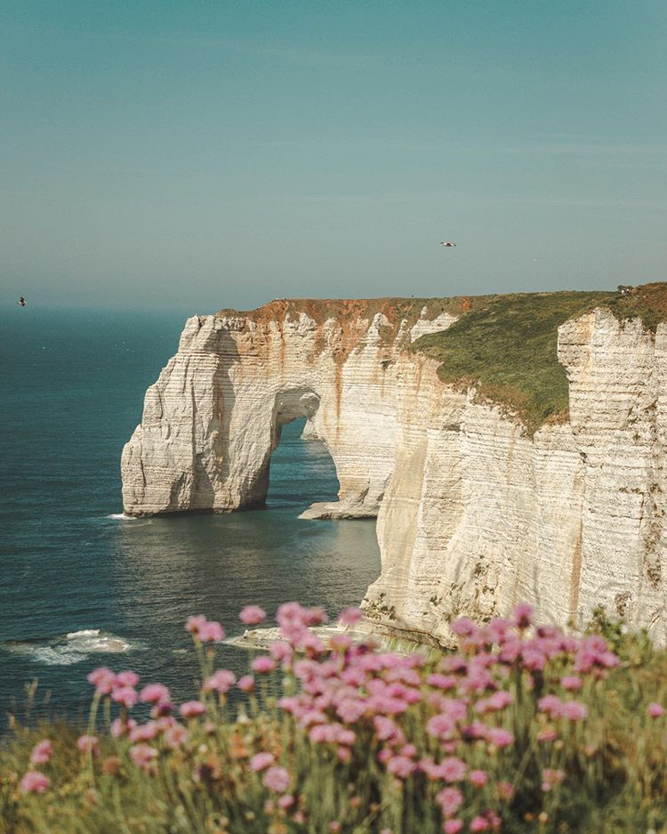 white cliffs with grass and pink flowers in the foreground