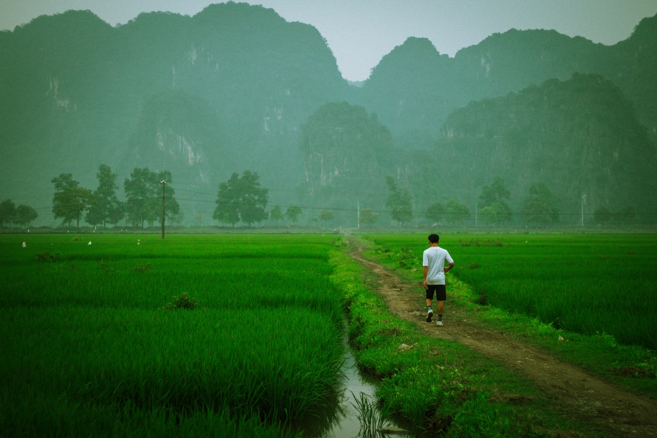 man wearing a white t-shirt walking in a rice paddy with mountains in the background