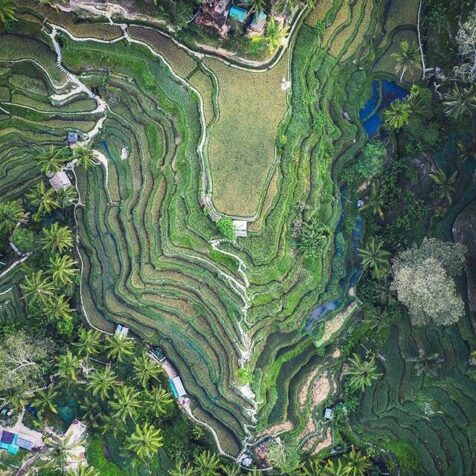 drone photography of a rice terrace in bali