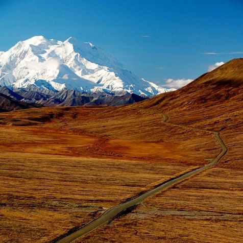 Is Denali National Park Worth It?